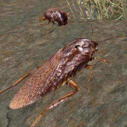 Скачать Симулятор тараканов